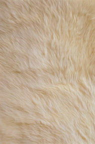 Yellow fur 3D texturing download