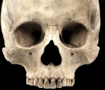 New Fines   s22-Skull Of Human 20