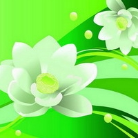 Common household decorative wall graphic flower in the case of the beautiful chapter NO.2